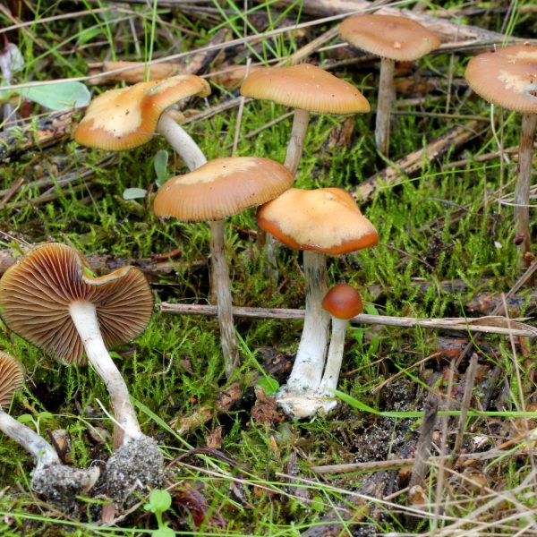 Buy Magic Mushroom Spores Online From Our Online Store Today At The Best Price. We Ship Our Top Quality Products Worldwide Safely And Fast.